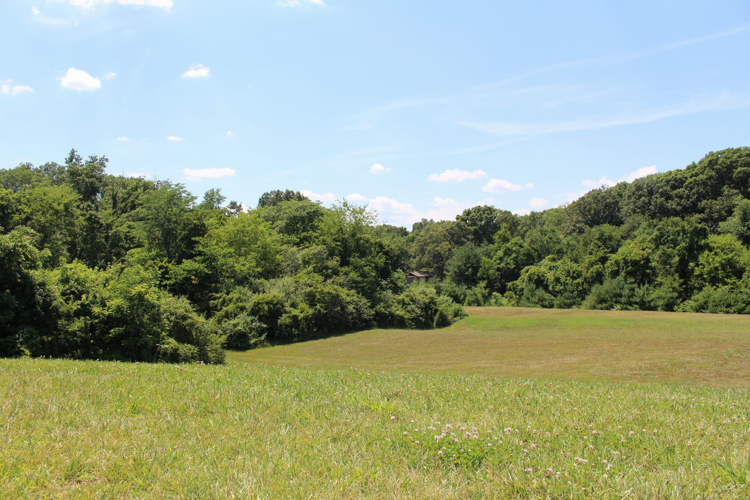 A photo of the undeveloped area at McFee Park