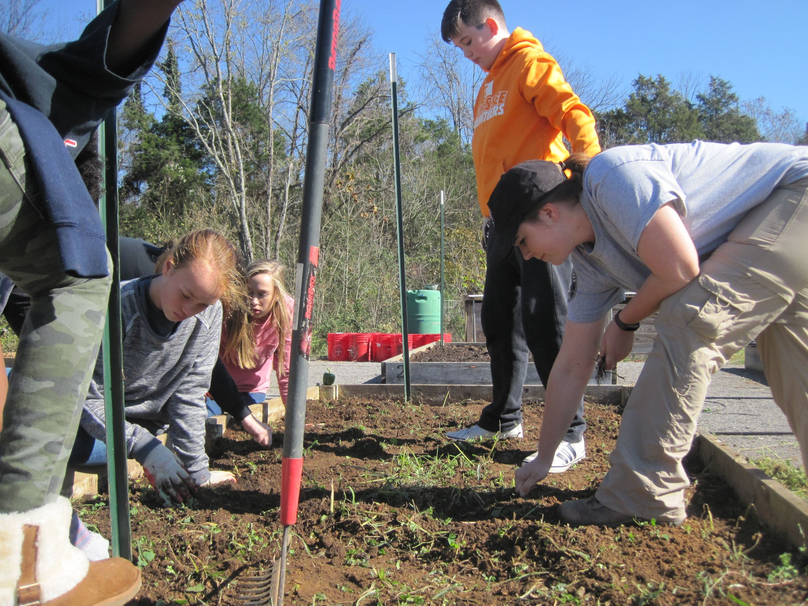 Americorps member pulling weeds with students